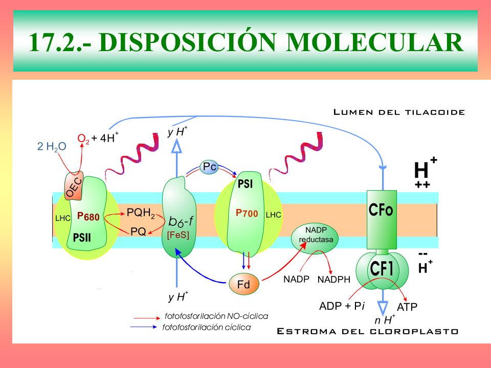 17.2.- DISPOSICIÓN MOLECULAR