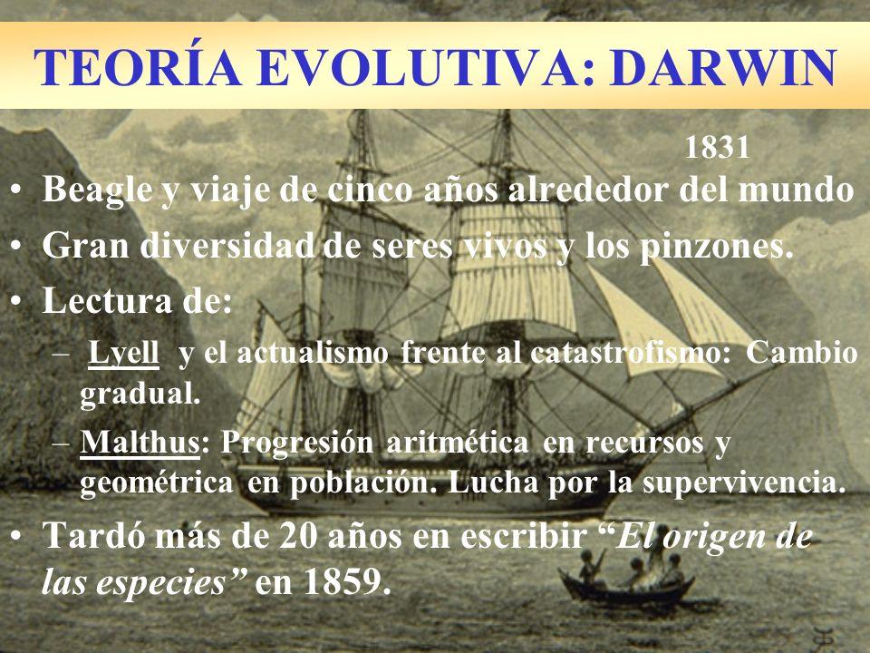 TEORÍA EVOLUTIVA: DARWIN