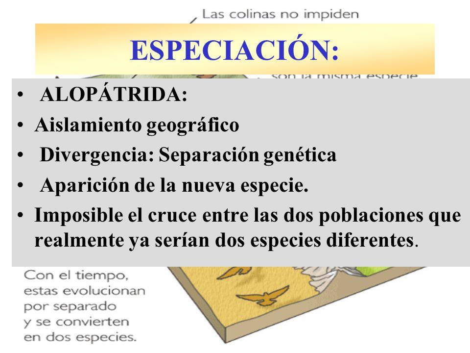 ESPECIACIÓN: ALOPÁTRIDA: Aislamiento geográfico