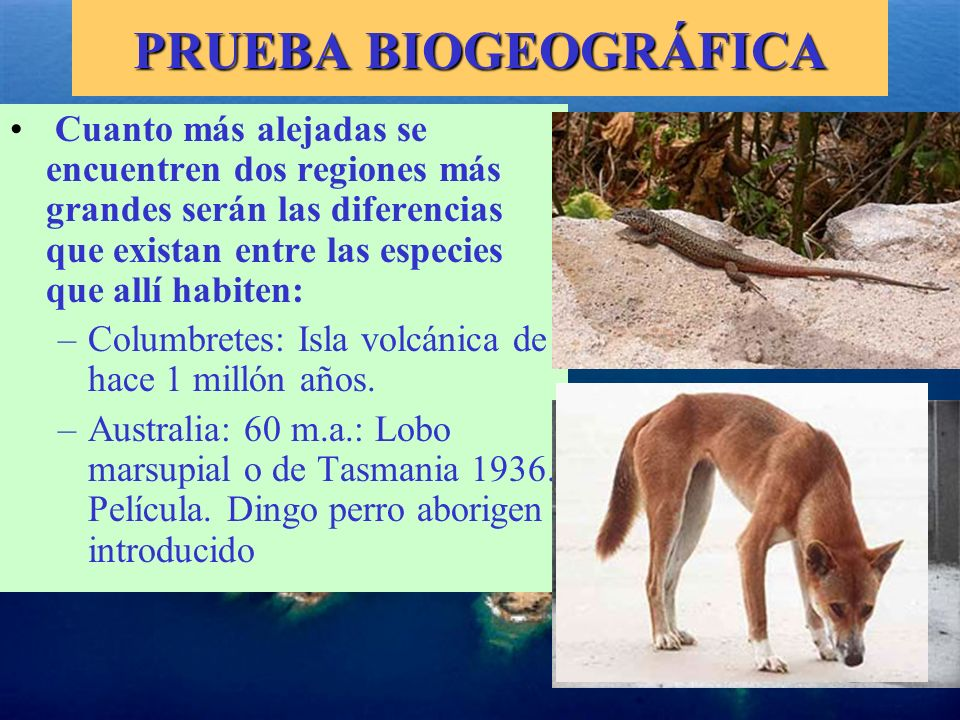 PRUEBA BIOGEOGRÁFICA