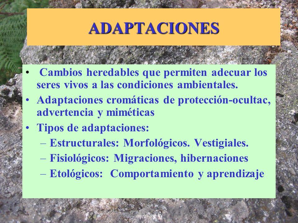 ADAPTACIONES Cambios heredables que permiten adecuar los seres vivos a las condiciones ambientales.