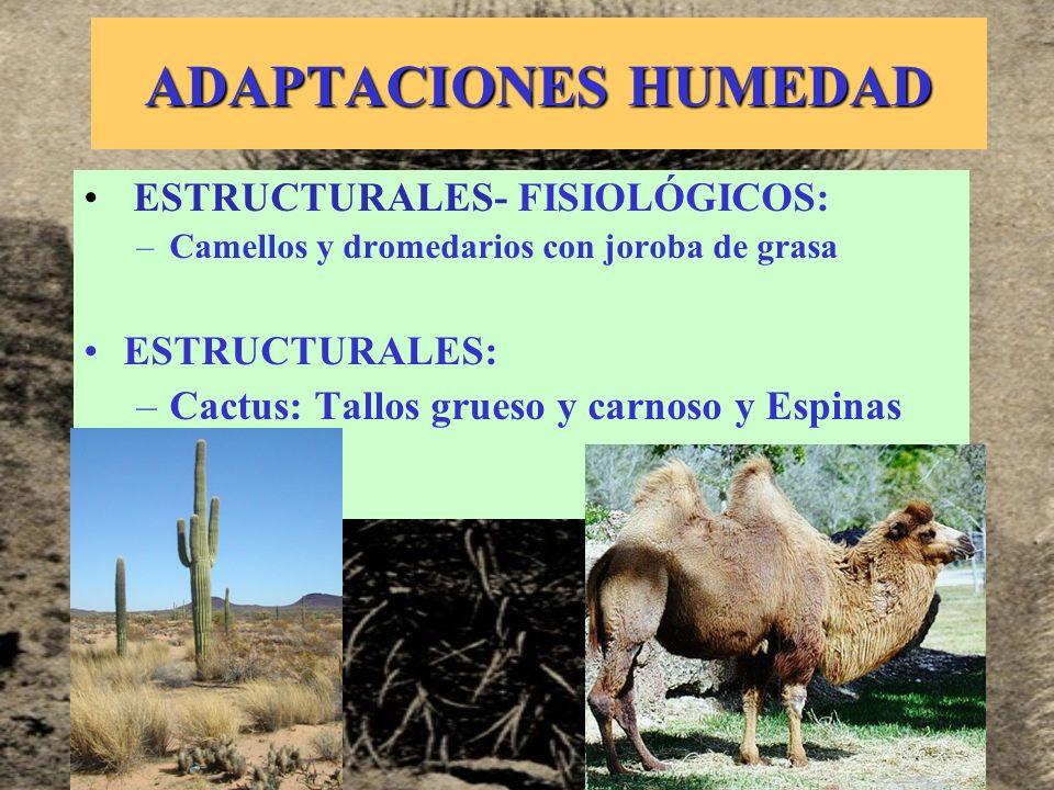 ADAPTACIONES HUMEDAD ESTRUCTURALES- FISIOLÓGICOS: ESTRUCTURALES: