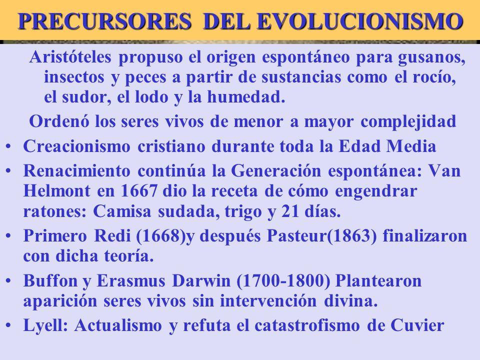 PRECURSORES DEL EVOLUCIONISMO