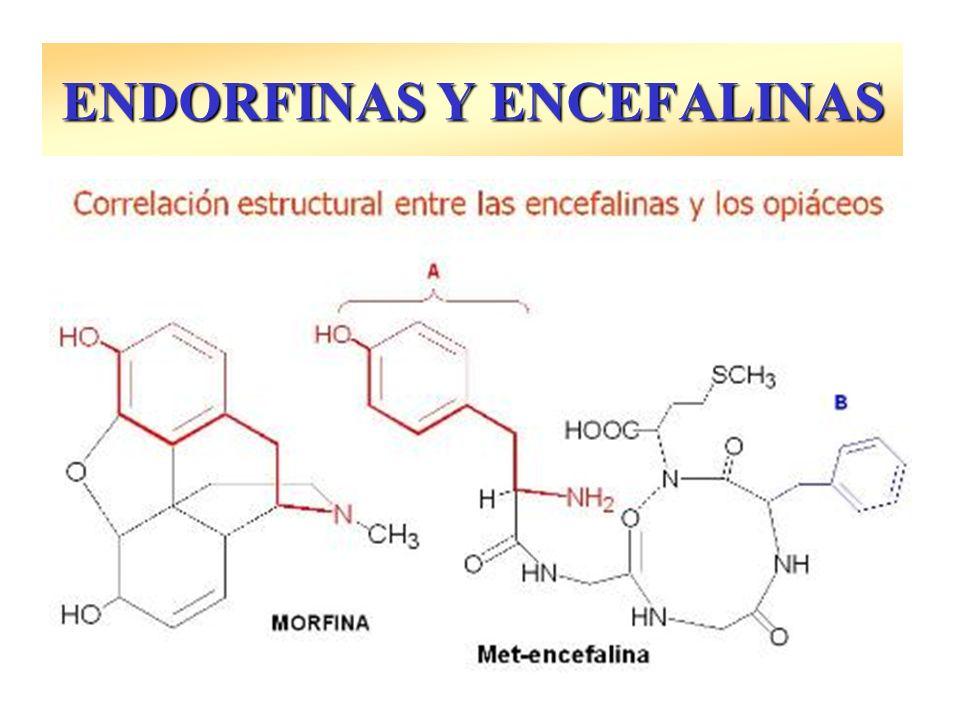 ENDORFINAS Y ENCEFALINAS