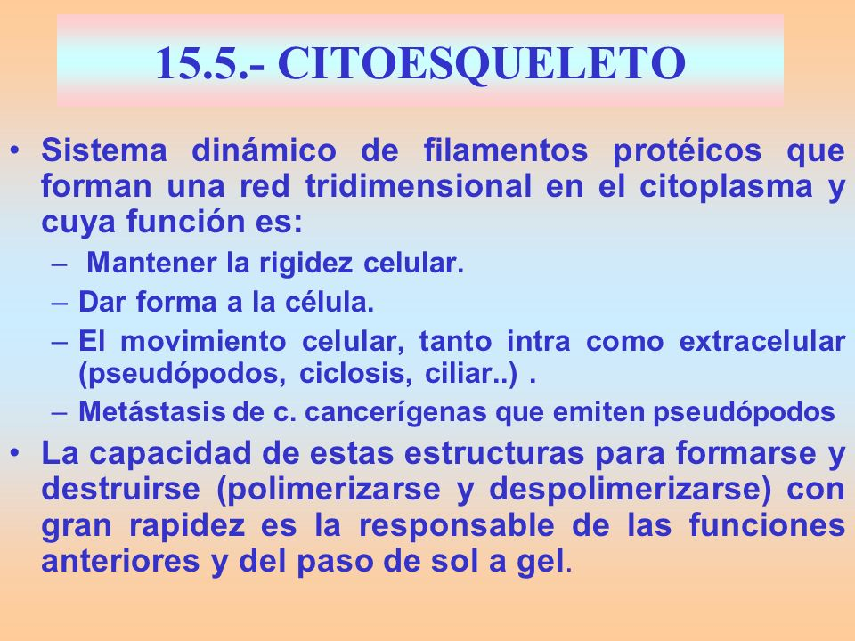 15.5.- CITOESQUELETO Sistema dinámico de filamentos protéicos que forman una red tridimensional en el citoplasma y cuya función es: