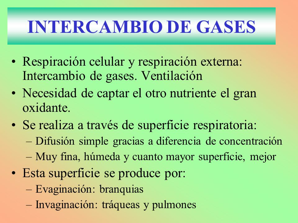 INTERCAMBIO DE GASES Respiración celular y respiración externa: Intercambio de gases. Ventilación.