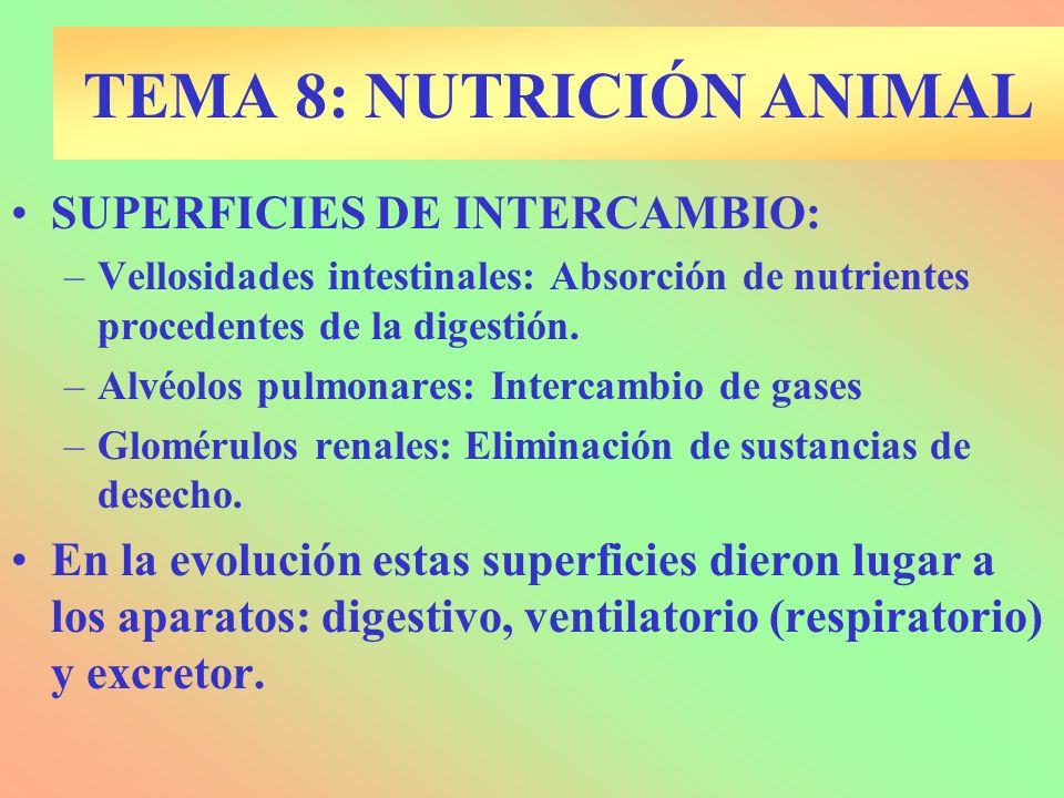 TEMA 8: NUTRICIÓN ANIMAL