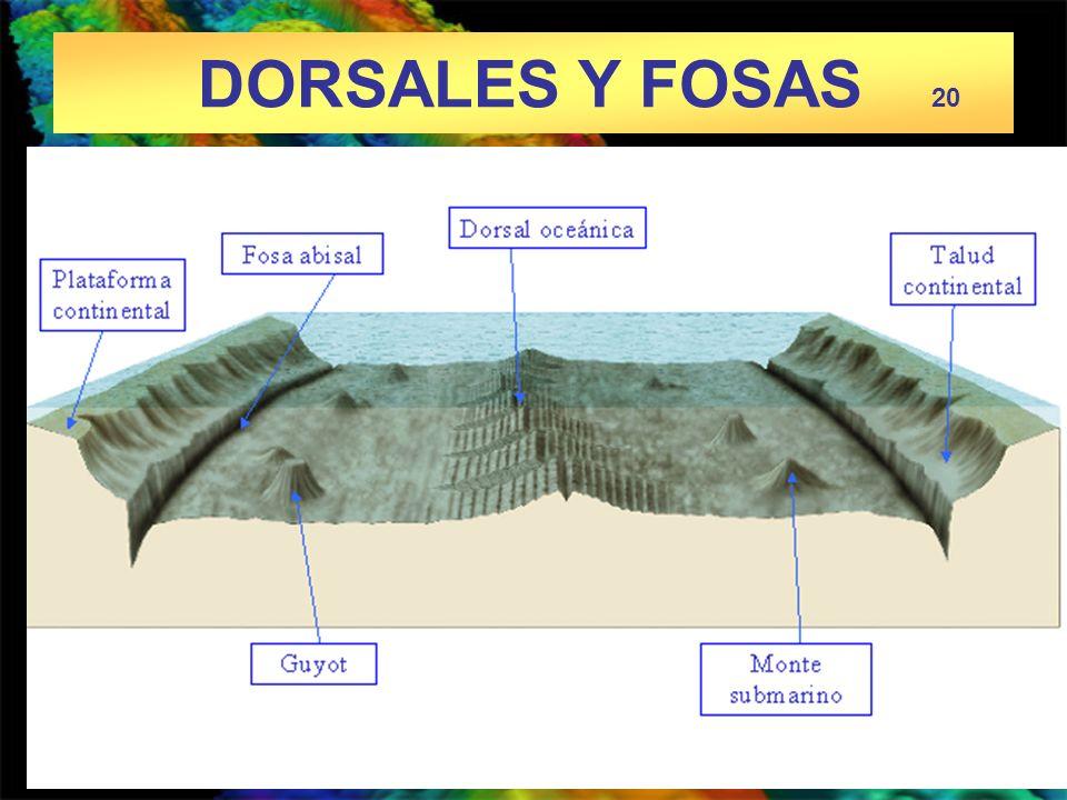 DORSALES Y FOSAS 20