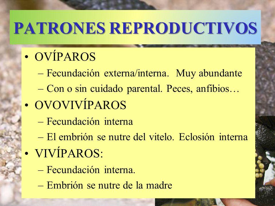 PATRONES REPRODUCTIVOS