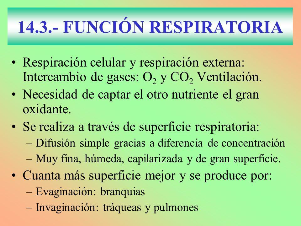 14.3.- FUNCIÓN RESPIRATORIA