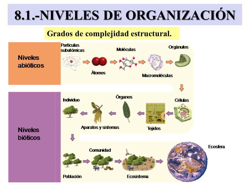 8.1.-NIVELES DE ORGANIZACIÓN
