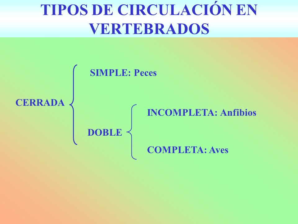 TIPOS DE CIRCULACIÓN EN VERTEBRADOS