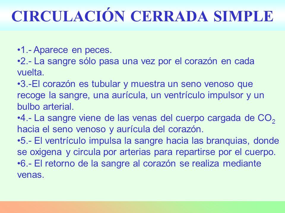CIRCULACIÓN CERRADA SIMPLE