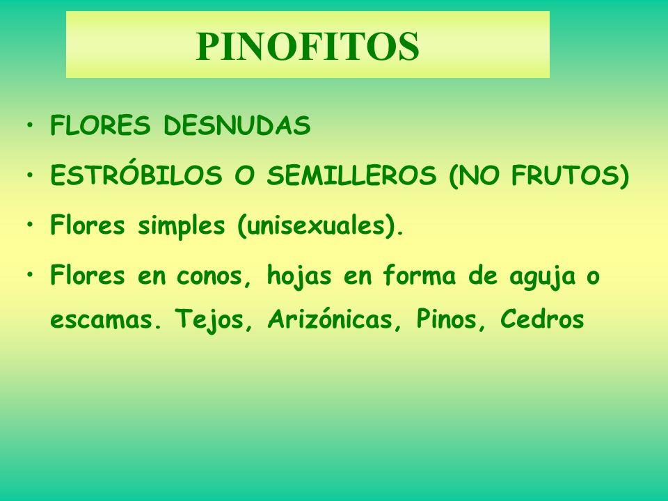 PINOFITOS FLORES DESNUDAS ESTRÓBILOS O SEMILLEROS (NO FRUTOS)