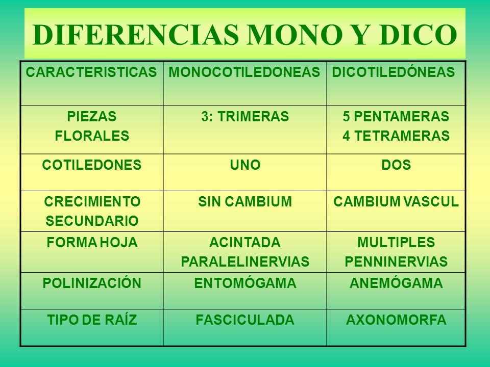 Dicotiledoneas y monocotiledoneas ppt / Swissgear Wireless Mouse ...