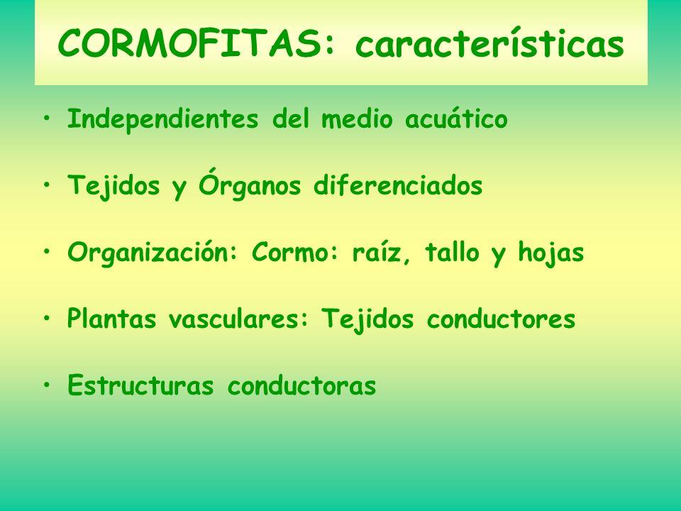 CORMOFITAS: características