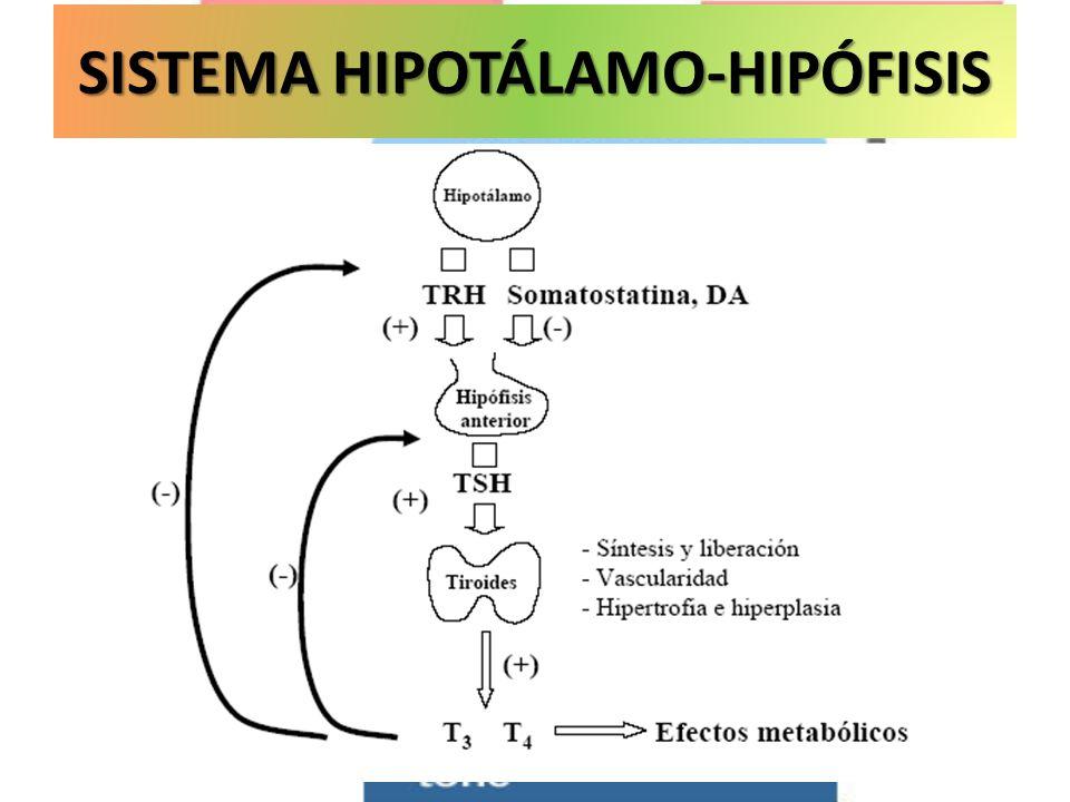 SISTEMA HIPOTÁLAMO-HIPÓFISIS