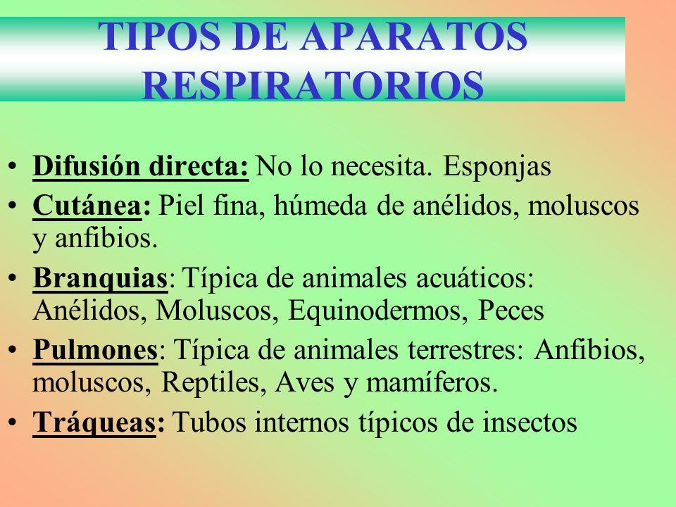 TIPOS DE APARATOS RESPIRATORIOS