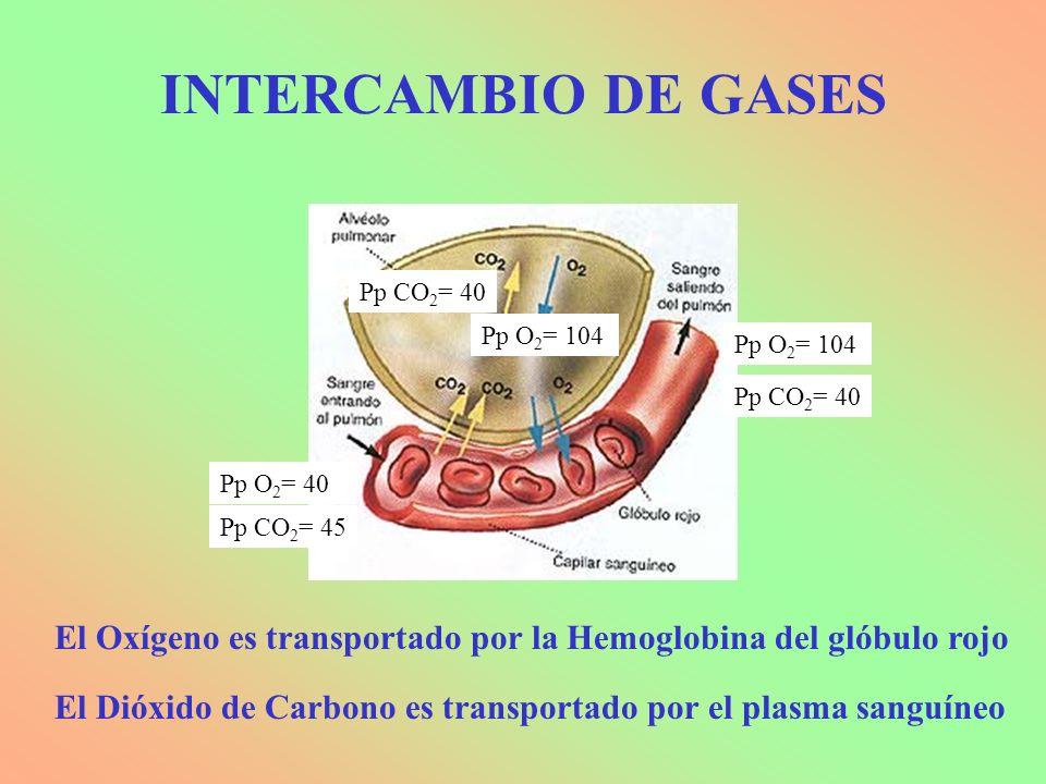 INTERCAMBIO DE GASES Pp CO2= 40. Pp O2= 104. Pp O2= 104. Pp CO2= 40. Pp O2= 40. Pp CO2= 45.
