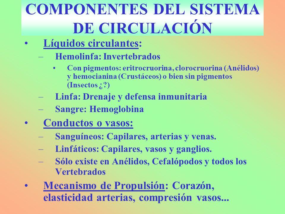 COMPONENTES DEL SISTEMA DE CIRCULACIÓN