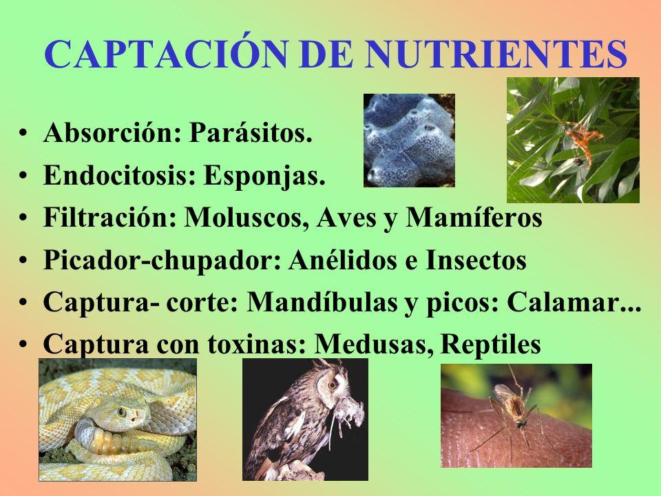 CAPTACIÓN DE NUTRIENTES