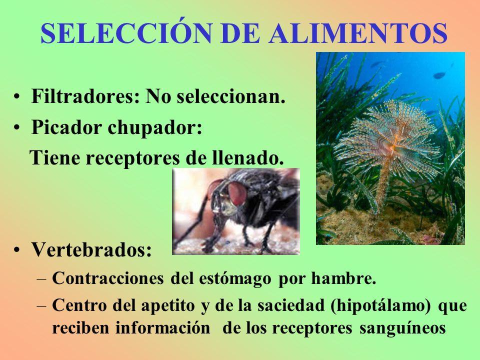 SELECCIÓN DE ALIMENTOS