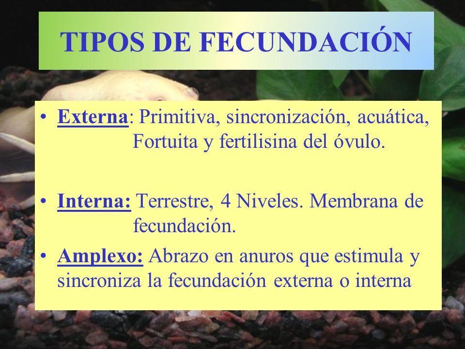TIPOS DE FECUNDACIÓN Externa: Primitiva, sincronización, acuática, Fortuita y fertilisina del óvulo.
