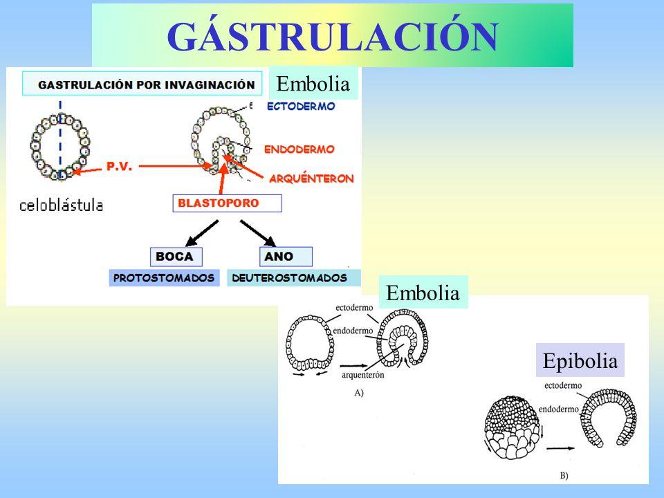 GÁSTRULACIÓN Embolia Embolia Epibolia