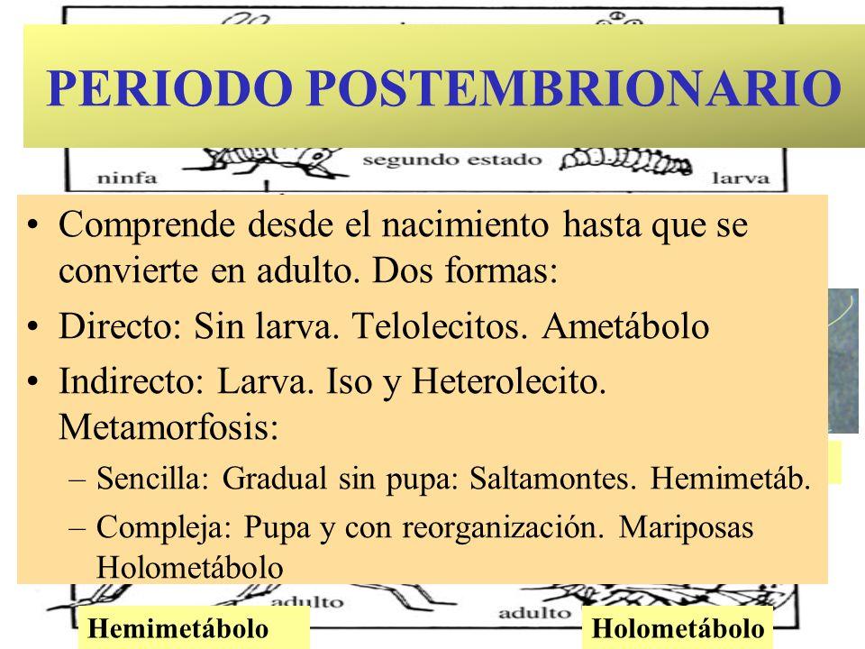 PERIODO POSTEMBRIONARIO