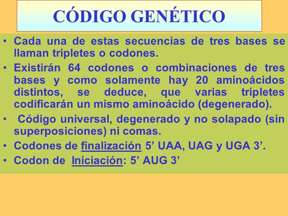 CÓDIGO GENÉTICOCada una de estas secuencias de tres bases se llaman tripletes o codones.