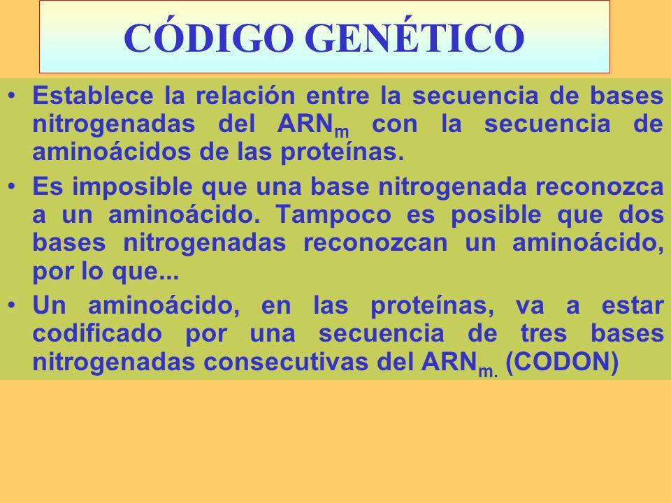 CÓDIGO GENÉTICO Establece la relación entre la secuencia de bases nitrogenadas del ARNm con la secuencia de aminoácidos de las proteínas.