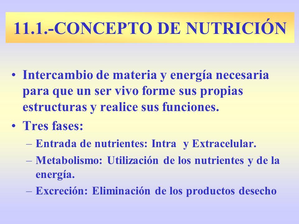 11.1.-CONCEPTO DE NUTRICIÓN
