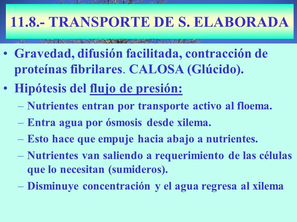 11.8.- TRANSPORTE DE S. ELABORADA