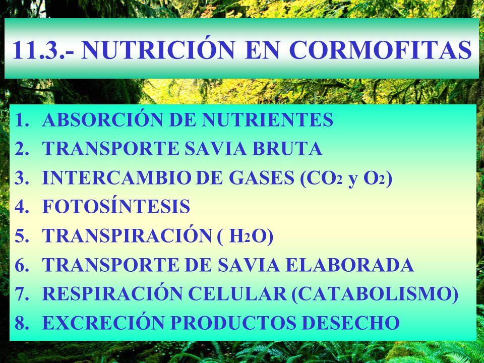 11.3.- NUTRICIÓN EN CORMOFITAS