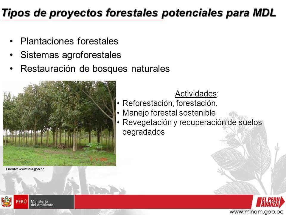 Tipos de proyectos forestales potenciales para MDL