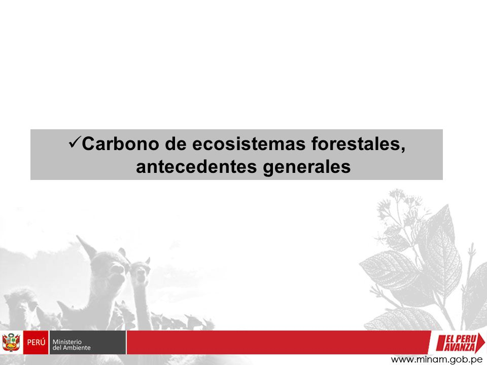 Carbono de ecosistemas forestales, antecedentes generales