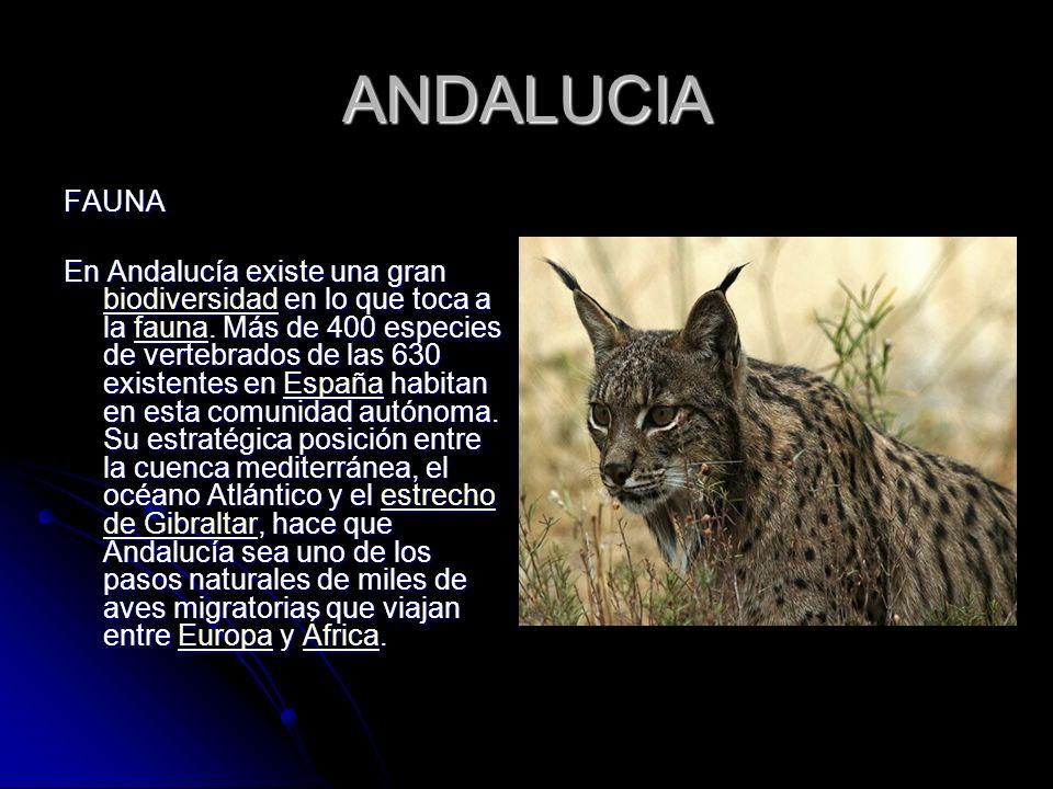 ANDALUCIA FAUNA.