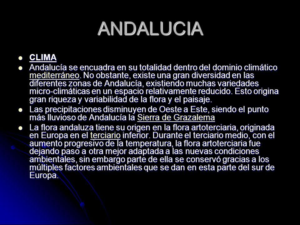 ANDALUCIA CLIMA.