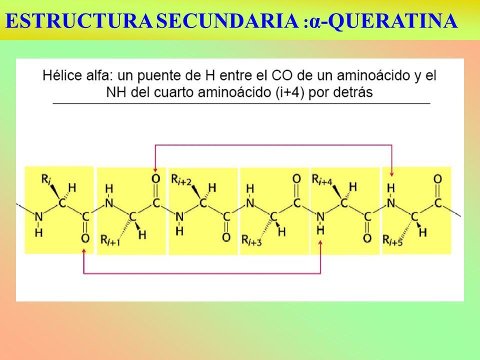 ESTRUCTURA SECUNDARIA :α-QUERATINA