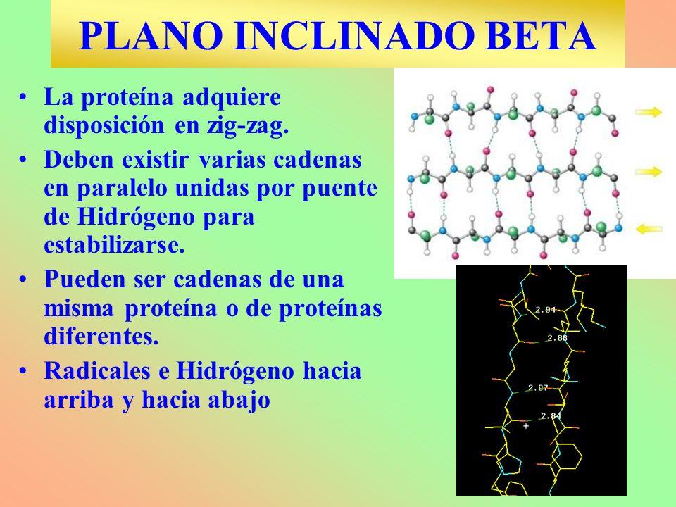 PLANO INCLINADO BETA La proteína adquiere disposición en zig-zag.
