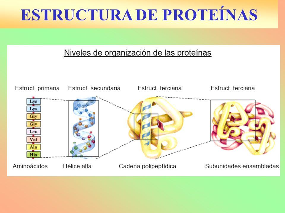 ESTRUCTURA DE PROTEÍNAS