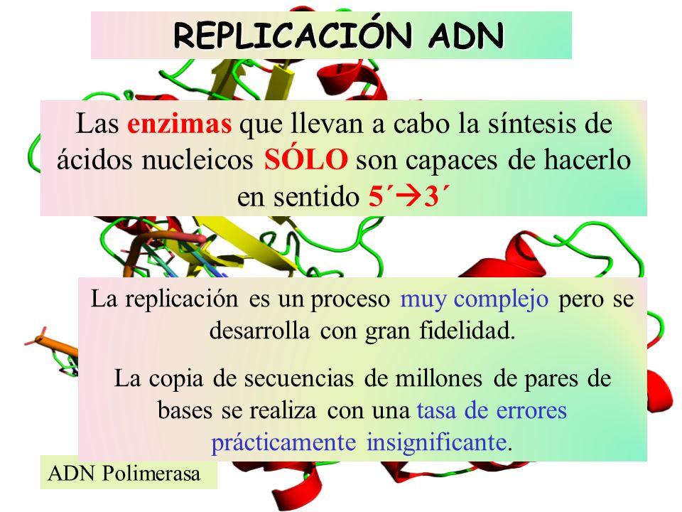 REPLICACIÓN ADN Las enzimas que llevan a cabo la síntesis de ácidos nucleicos SÓLO son capaces de hacerlo en sentido 5´3´