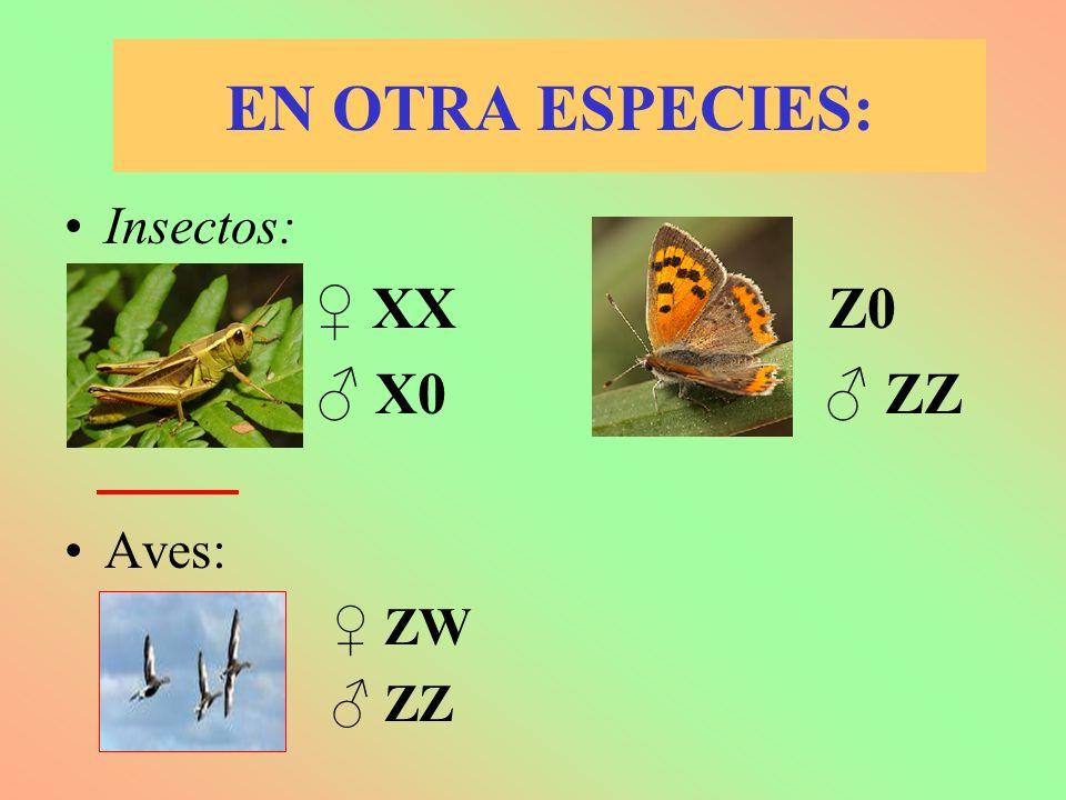 EN OTRA ESPECIES: Insectos: ♀ XX ♀ Z0 ♂ X0 ♂ ZZ Aves: ♀ ZW ♂ ZZ