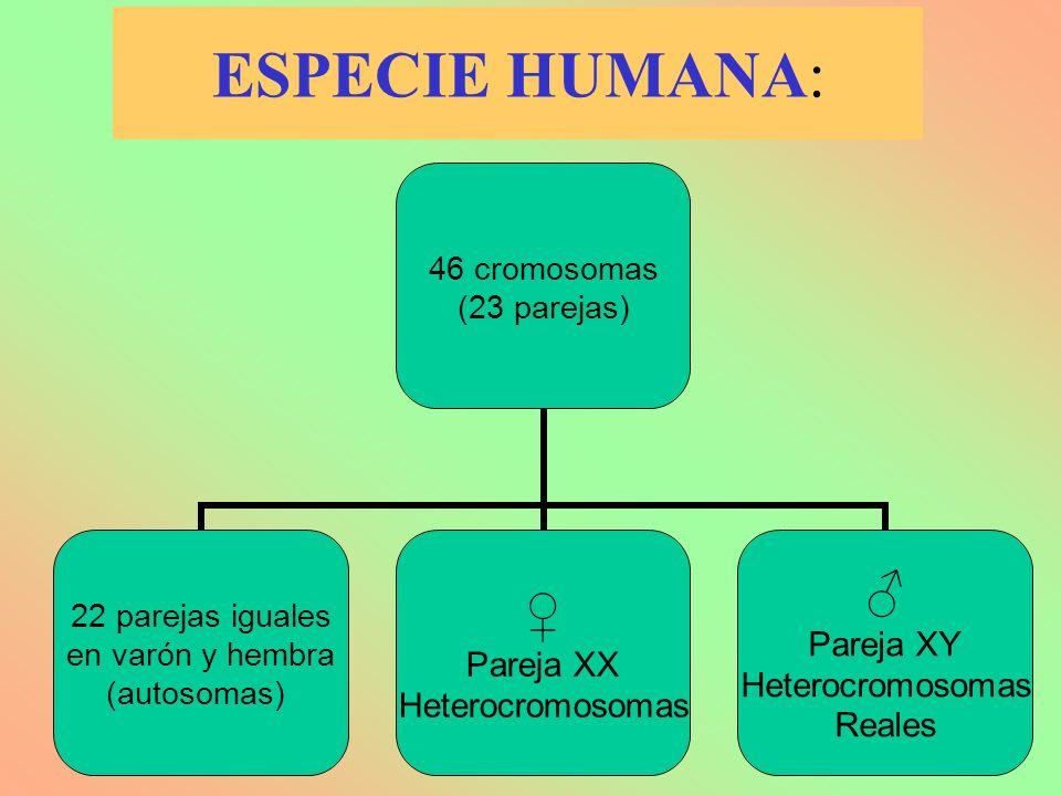 ESPECIE HUMANA: