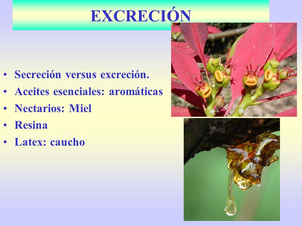 EXCRECIÓN Secreción versus excreción. Aceites esenciales: aromáticas