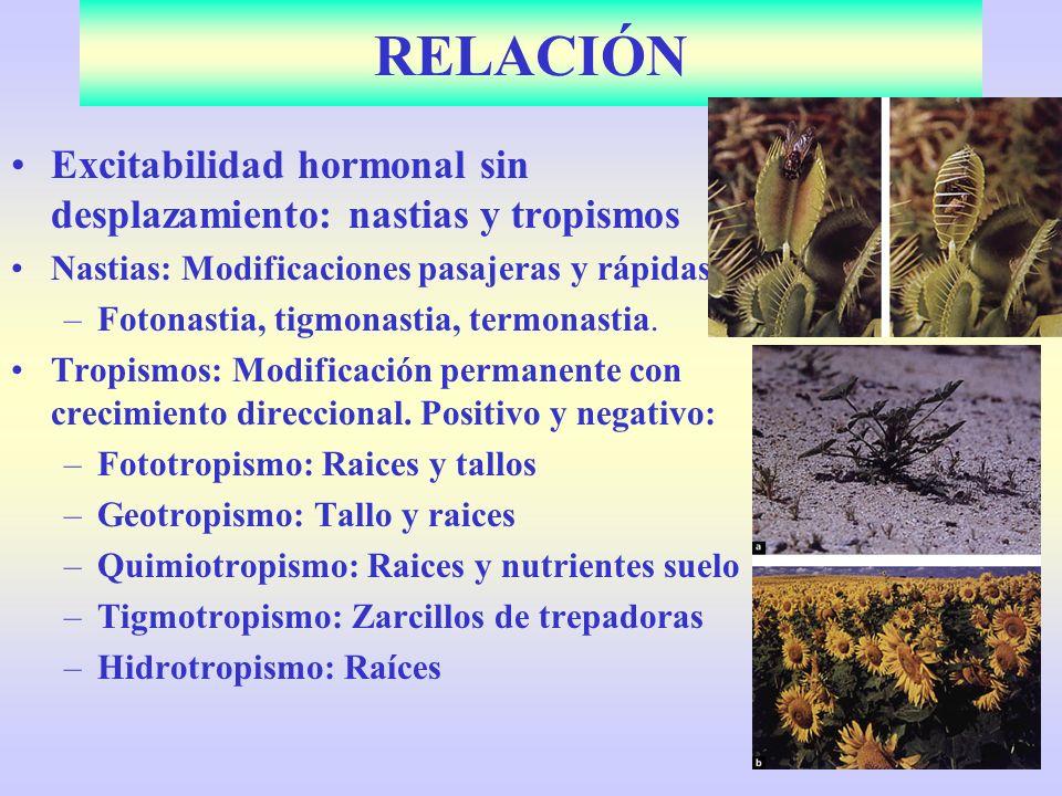 RELACIÓN Excitabilidad hormonal sin desplazamiento: nastias y tropismos. Nastias: Modificaciones pasajeras y rápidas: