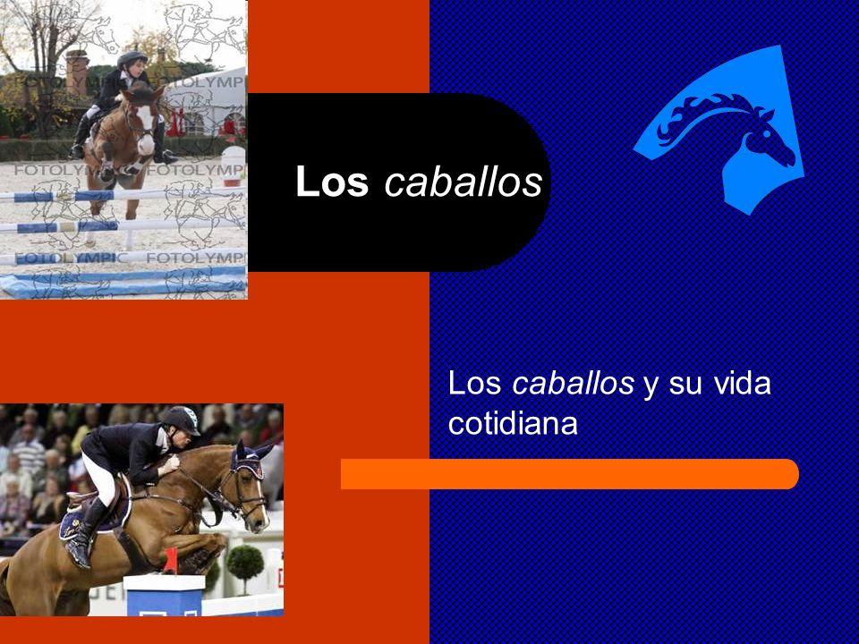 Los caballos y su vida cotidiana