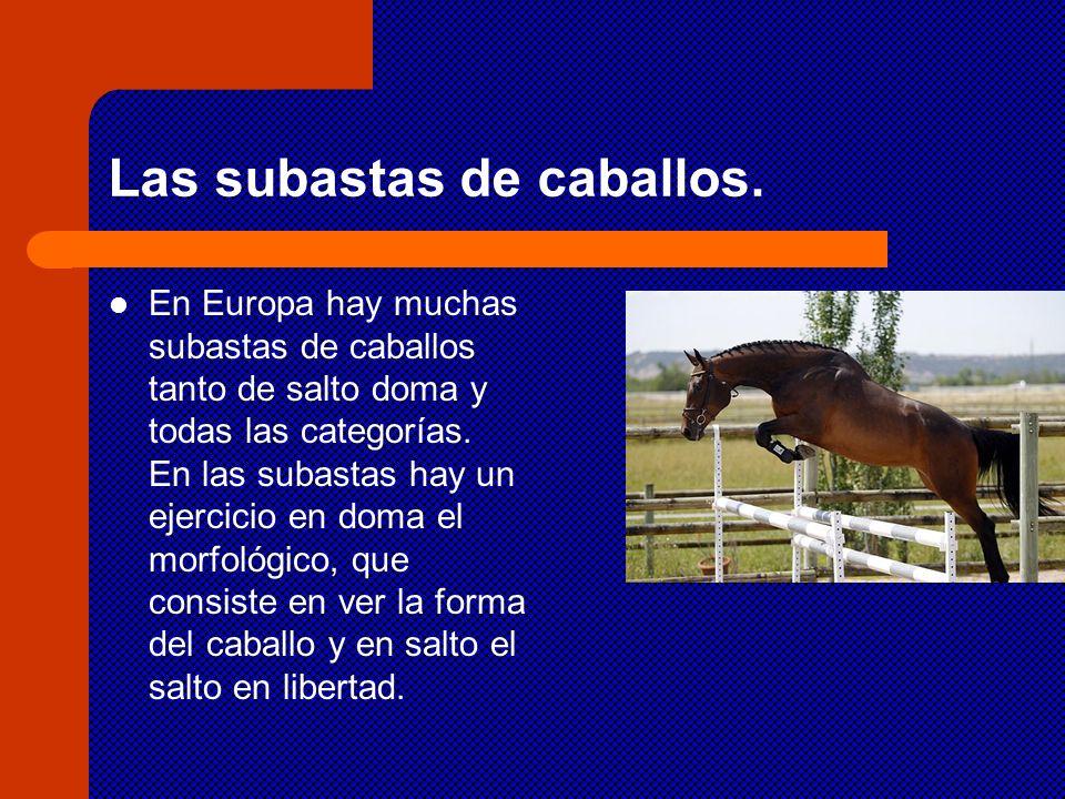 Las subastas de caballos.