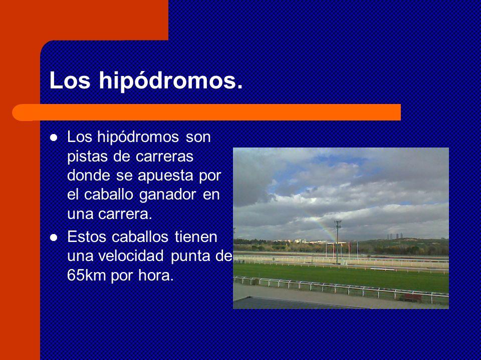 Los hipódromos. Los hipódromos son pistas de carreras donde se apuesta por el caballo ganador en una carrera.