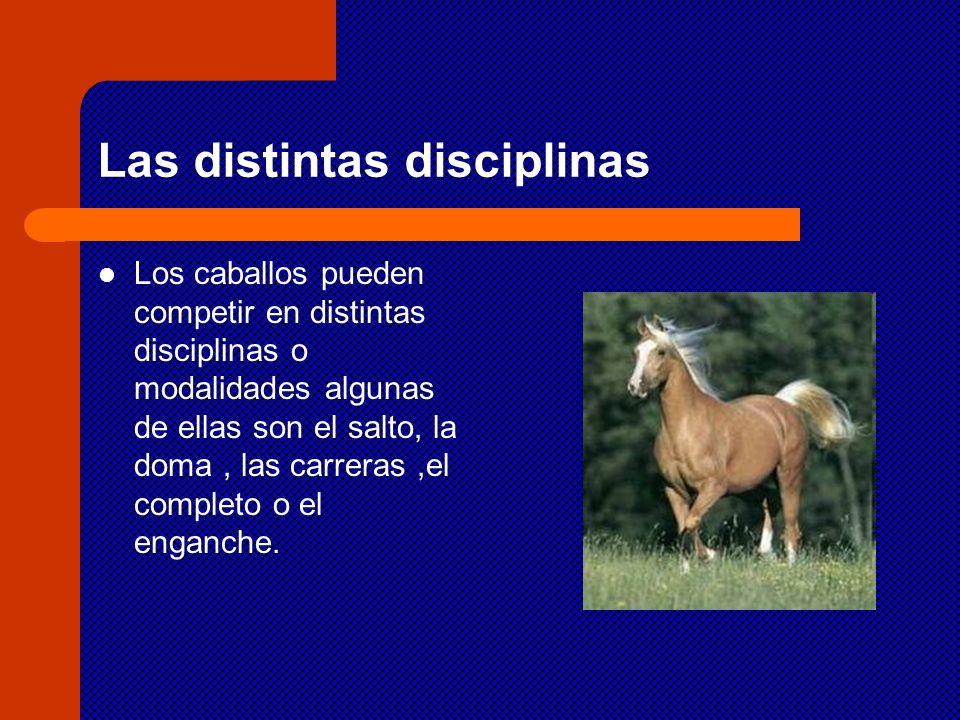 Las distintas disciplinas